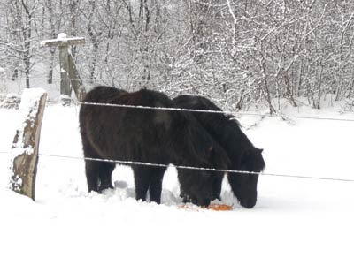 Pony im Winter